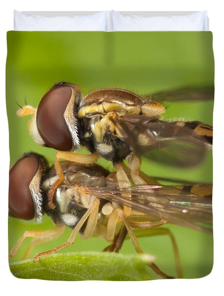 Flower Flies Mating Duvet Cover by Clarence Holmes
