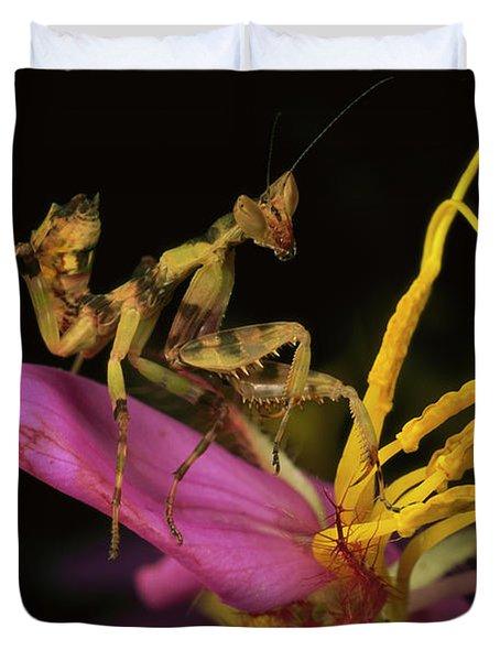 Flower Mantis Nymph Duvet Cover by Mark Moffett