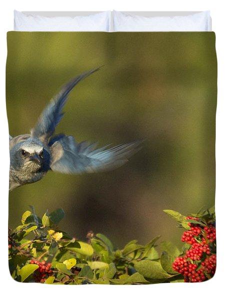 Flying Florida Scrub Jay Photo Duvet Cover