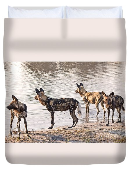 Duvet Cover featuring the photograph Four Alert African Wild Dogs by Liz Leyden