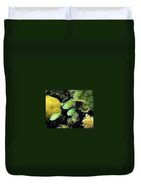 Duvet Cover featuring the photograph Four Chromis Green Fish by Janette Boyd