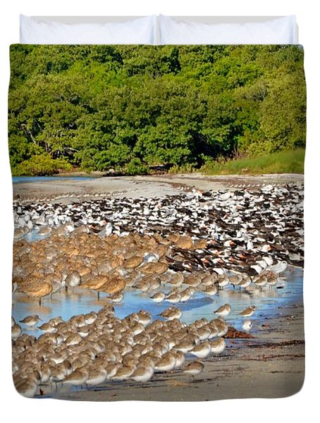 Duvet Cover featuring the photograph Four Species Of Birds At Roost On Tampa Bay Beach by Jeff at JSJ Photography