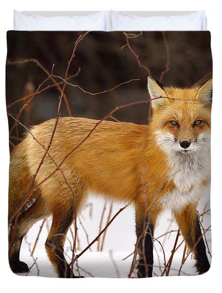 Fox In Winter Duvet Cover