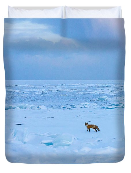 Fox Of The North Country Iv Duvet Cover by Mary Amerman