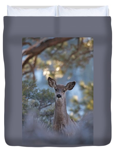 Framed Deer Head And Shoulders Duvet Cover by Duncan Selby