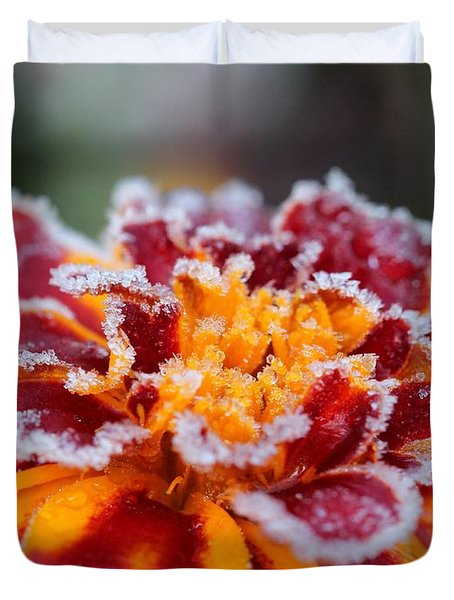 French Marigold Named Durango Red Outlined With Frost Duvet Cover by J McCombie