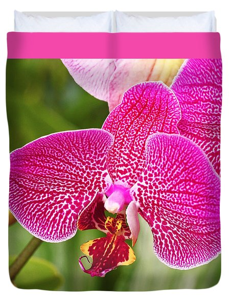 Fuchsia Moth Orchid Duvet Cover by Rona Black