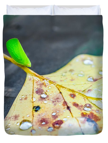 Duvet Cover featuring the photograph Fulgoroidea On A Leaf by Rob Sellers