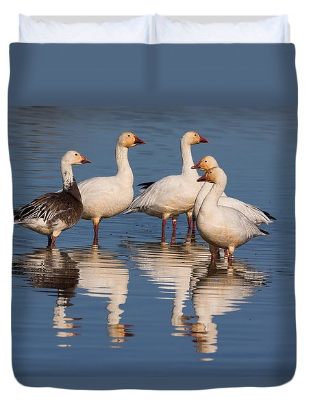 Gaggle Of Snow Geese Reflected Duvet Cover