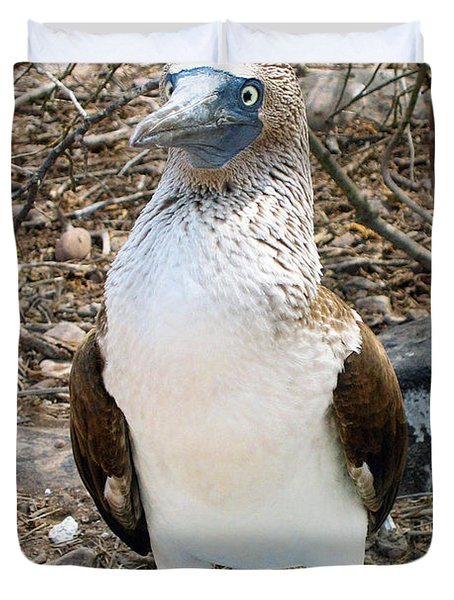 Galapagos Island Blue Footed Booby Bird 1 Duvet Cover