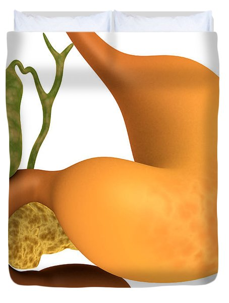 Gall Bladder With Stomach Duvet Cover