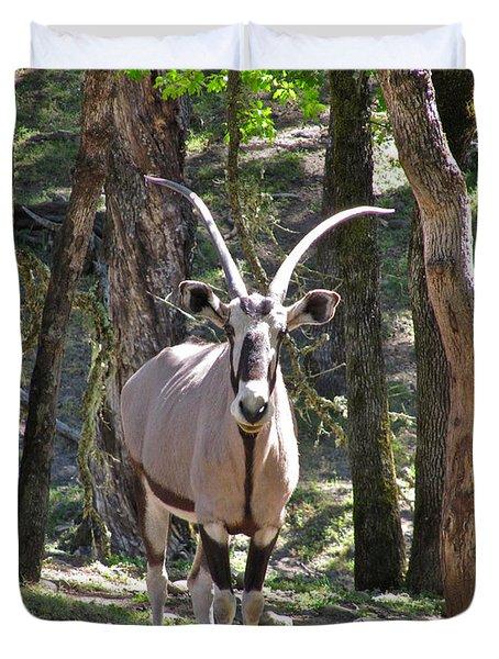 Gemsbok In The Woods Duvet Cover by CML Brown