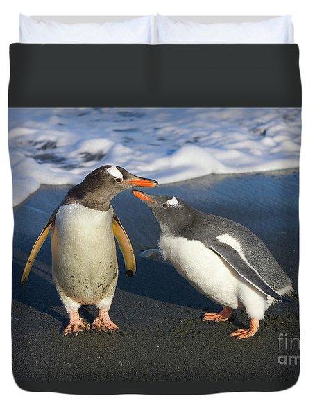 Gentoo Penguin Chick Begging For Food Duvet Cover by Yva Momatiuk and John Eastcott