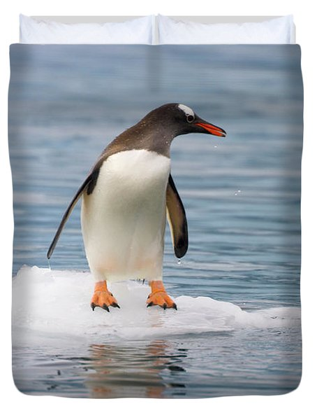 Gentoo Penguin On Ice Floe Antarctica Duvet Cover