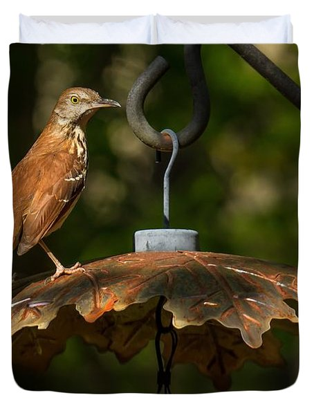 Duvet Cover featuring the photograph Georgia State Bird - Brown Thrasher by Robert L Jackson