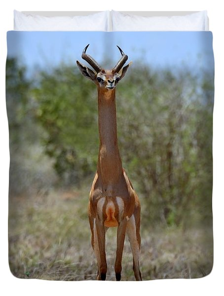 Gerenuk Duvet Cover by Tony Beck