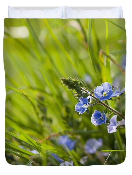 Germander Speedwell Duvet Cover by Anne Gilbert