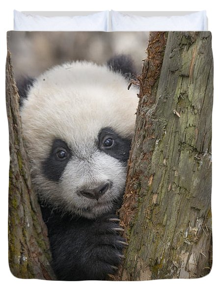 Duvet Cover featuring the photograph Giant Panda Cub Bifengxia Panda Base by Katherine Feng