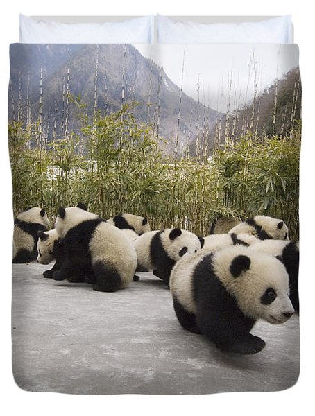 Duvet Cover featuring the photograph Giant Panda Cubs Wolong China by Katherine Feng