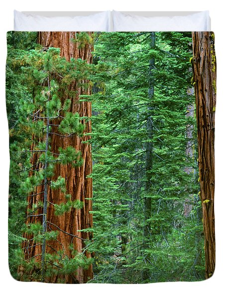 Giant Sequoias Sequoiadendron Gigantium Yosemite Np Ca Duvet Cover by Dave Welling