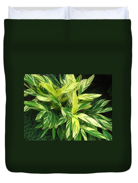 Duvet Cover featuring the photograph Ginger Lily. Alpinia Zerumbet by Connie Fox