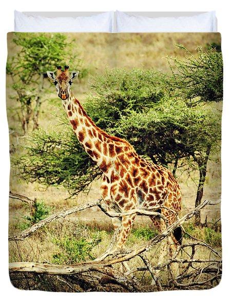 Giraffe On African Savanna Duvet Cover by Michal Bednarek