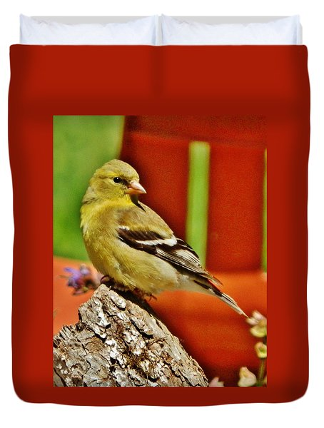 Duvet Cover featuring the photograph Girlie Goldfinch by VLee Watson