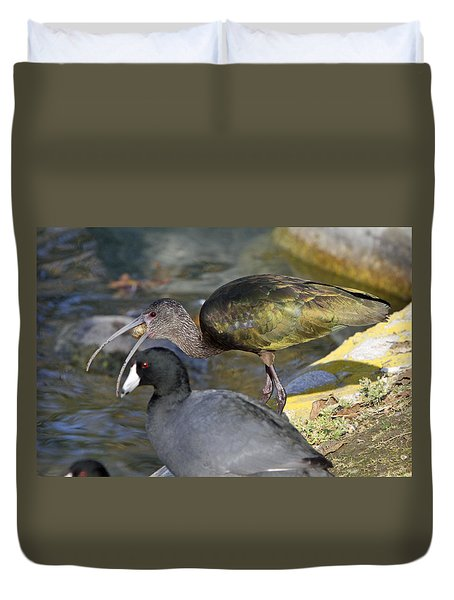 Glossy Ibis Eating Duvet Cover by Shoal Hollingsworth