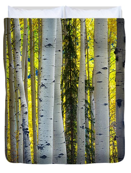 Glowing Aspens Duvet Cover by Inge Johnsson