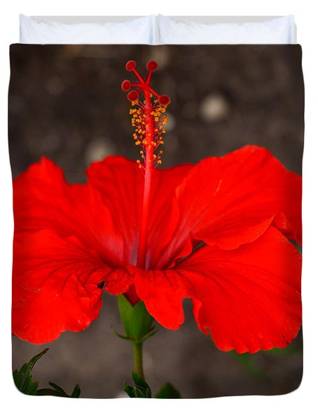 Glowing Red Hibiscus Duvet Cover