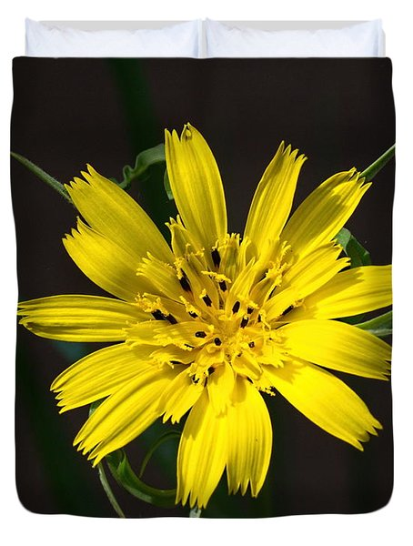 Duvet Cover featuring the photograph Goats Beard Flower by Paul Gulliver