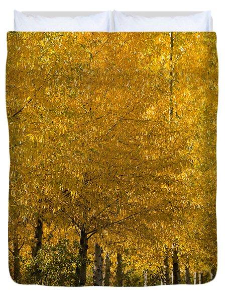 Duvet Cover featuring the photograph Golden Aspens by Don Schwartz