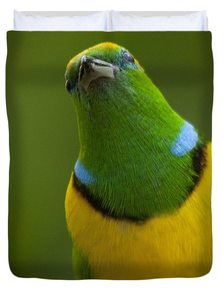 Golden-browed Chlorophonia - Chlorophonia Callophrys Duvet Cover by Heiko Koehrer-Wagner