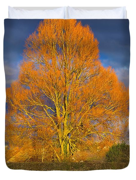 Duvet Cover featuring the photograph Golden Glow - Sunlit Tree by Paul Gulliver