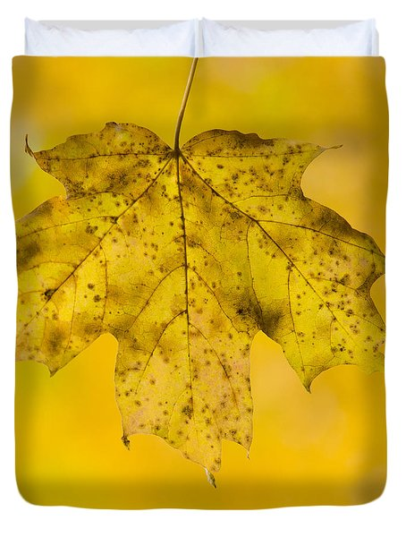 Duvet Cover featuring the photograph Golden Maple Leaf by Sebastian Musial