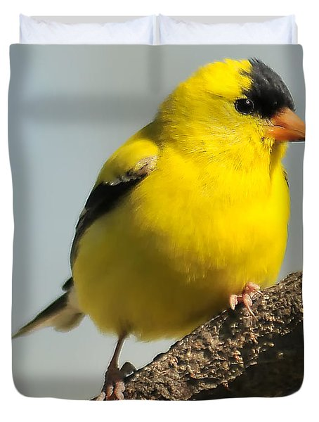 Goldfinch 306 Duvet Cover