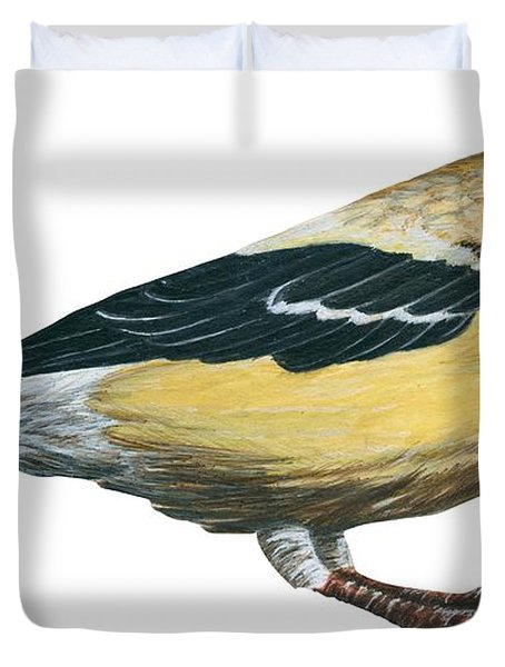 Goldfinch  Duvet Cover by Anonymous