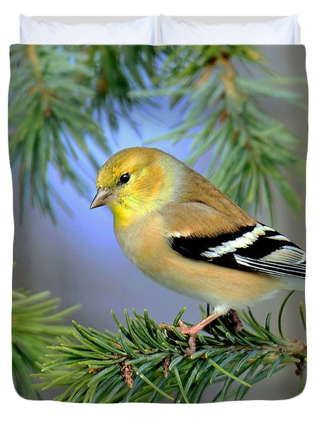 Goldfinch In A Fir Tree Duvet Cover by Rodney Campbell