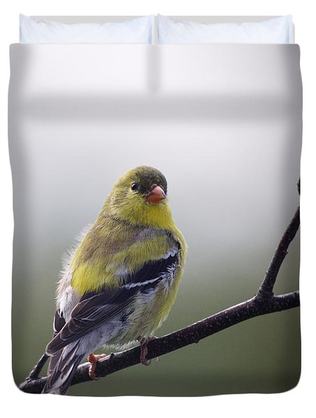 Duvet Cover featuring the photograph Goldfinch Molting To Breeding Colors by Susan Capuano