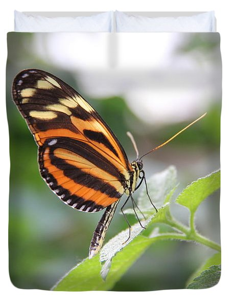 Good Morning Butterfly Duvet Cover