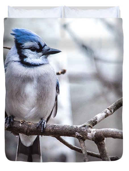 Gorgeous Blue Jay Duvet Cover