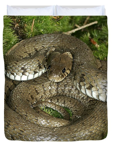 Grass Or Ringed Snake Duvet Cover