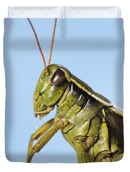 Grasshopper Close-up Duvet Cover by Thomas Kitchin & Victoria Hurst