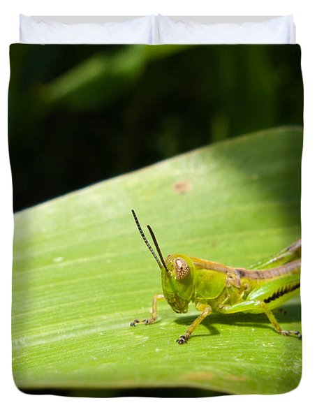 Grasshopper On Corn Leaf   Duvet Cover