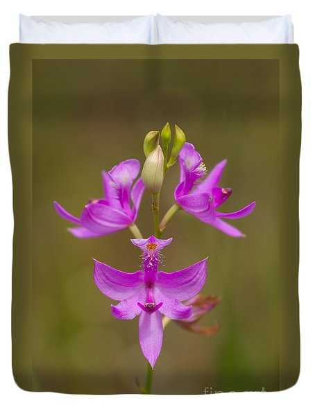 Duvet Cover featuring the photograph Grasspink #1 by Paul Rebmann