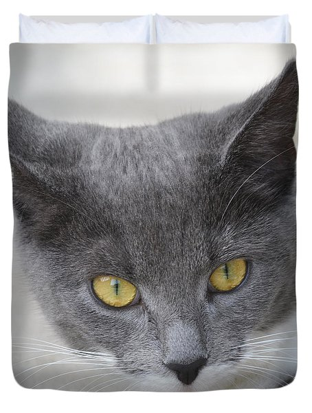 Gray Cat - Listening Duvet Cover