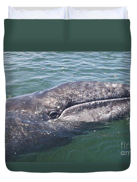 Gray / Grey Whale Eschrichtius Robustus Duvet Cover