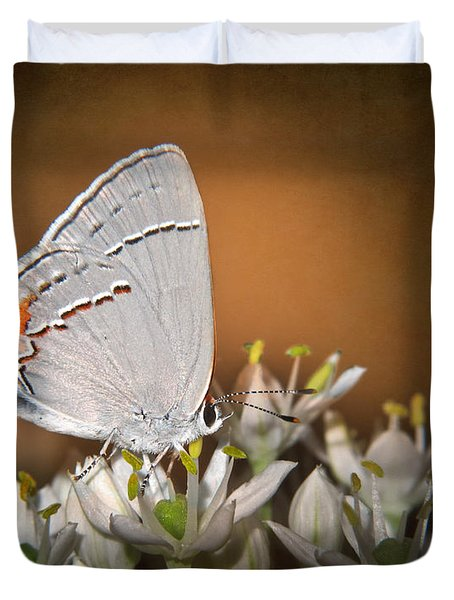 Gray Hairstreak Butterfly IIi Duvet Cover