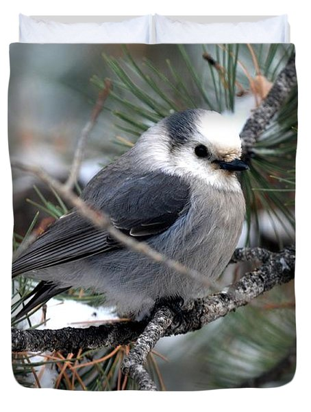Gray Jay On A Snowy Pine Duvet Cover
