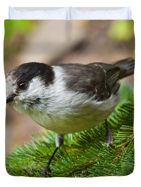 Gray Jay On Fir Tree Duvet Cover